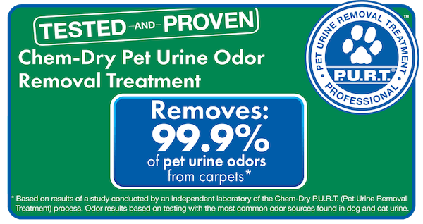 results for stain removal kissimmee fl